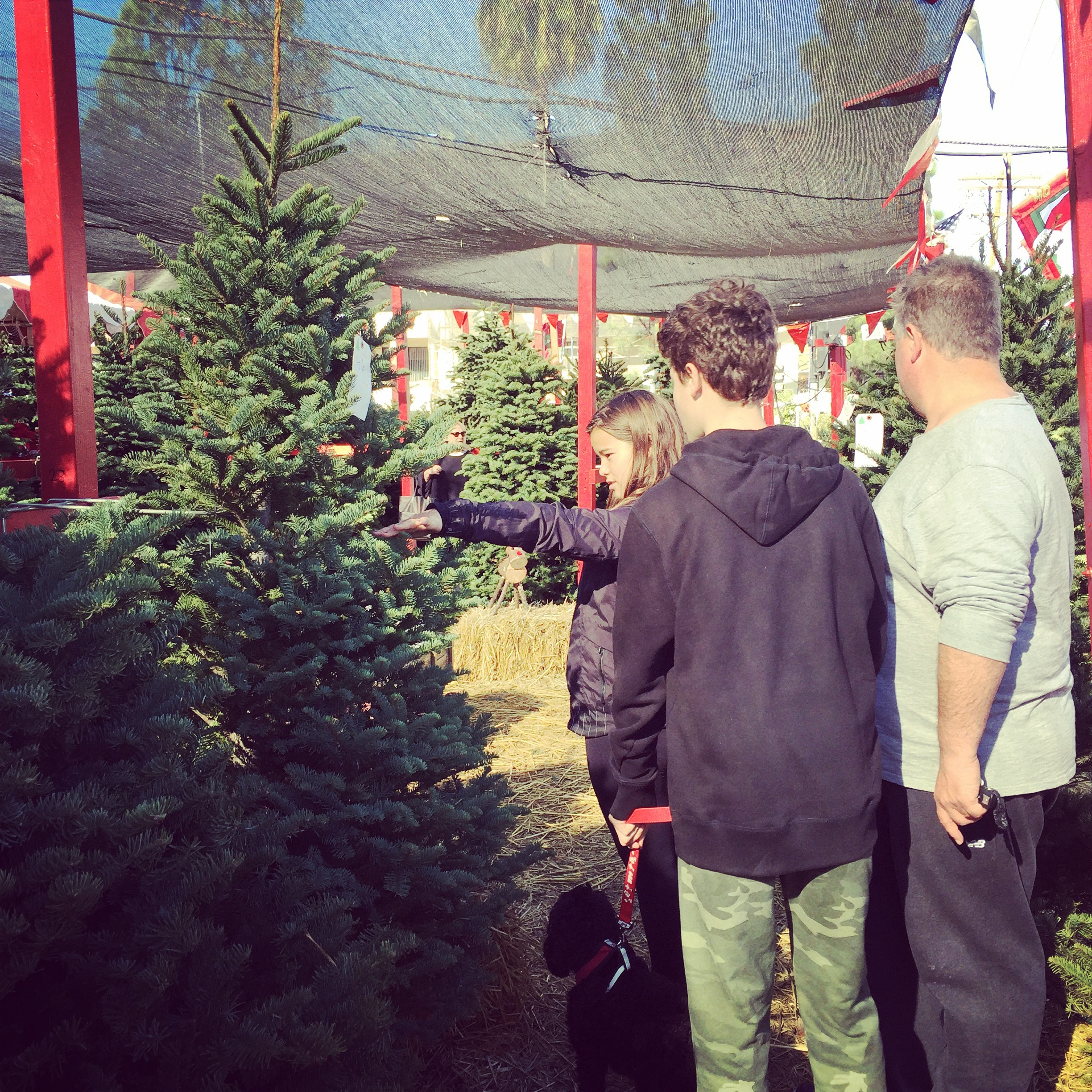 Xmas tree farms where you come and pick your own tree it started in la